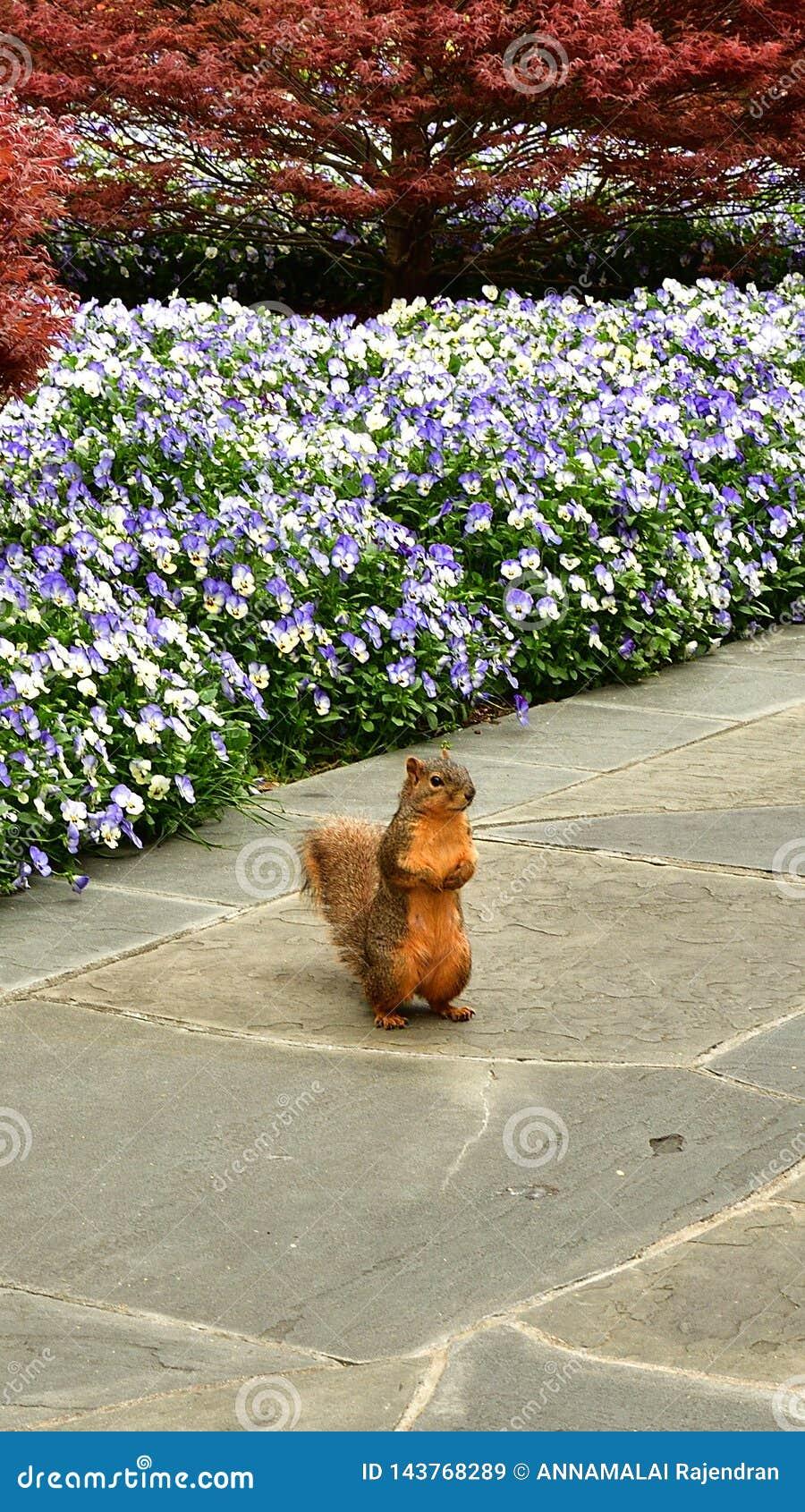 Trwanie dzika wiewiórka z kwitnienie kwiatami i drzewnym tłem