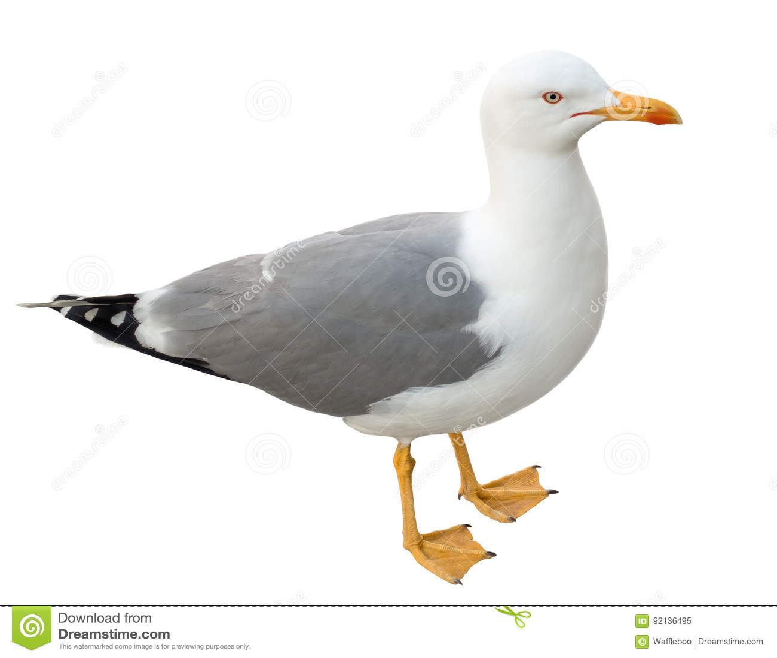 Trwanie seagull, odizolowywający na bielu