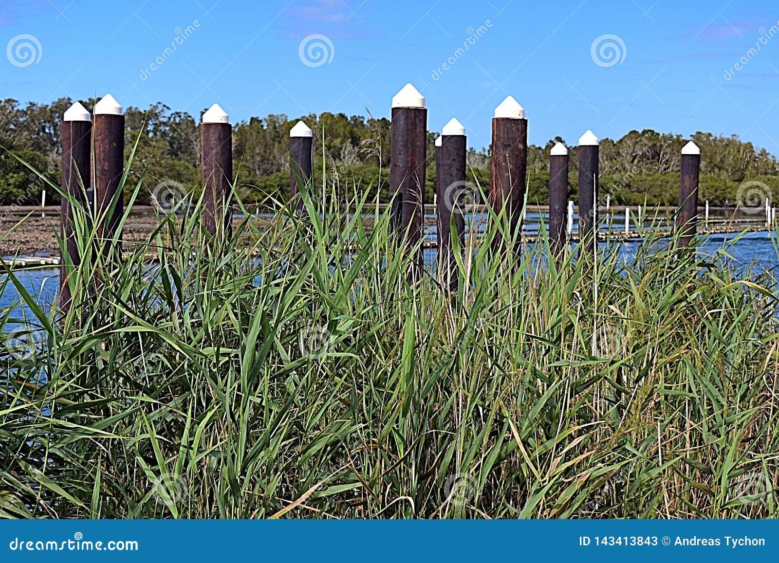 Trzcinowej trawy przedpole z molo pilonami i ostrygi arendowym tłem