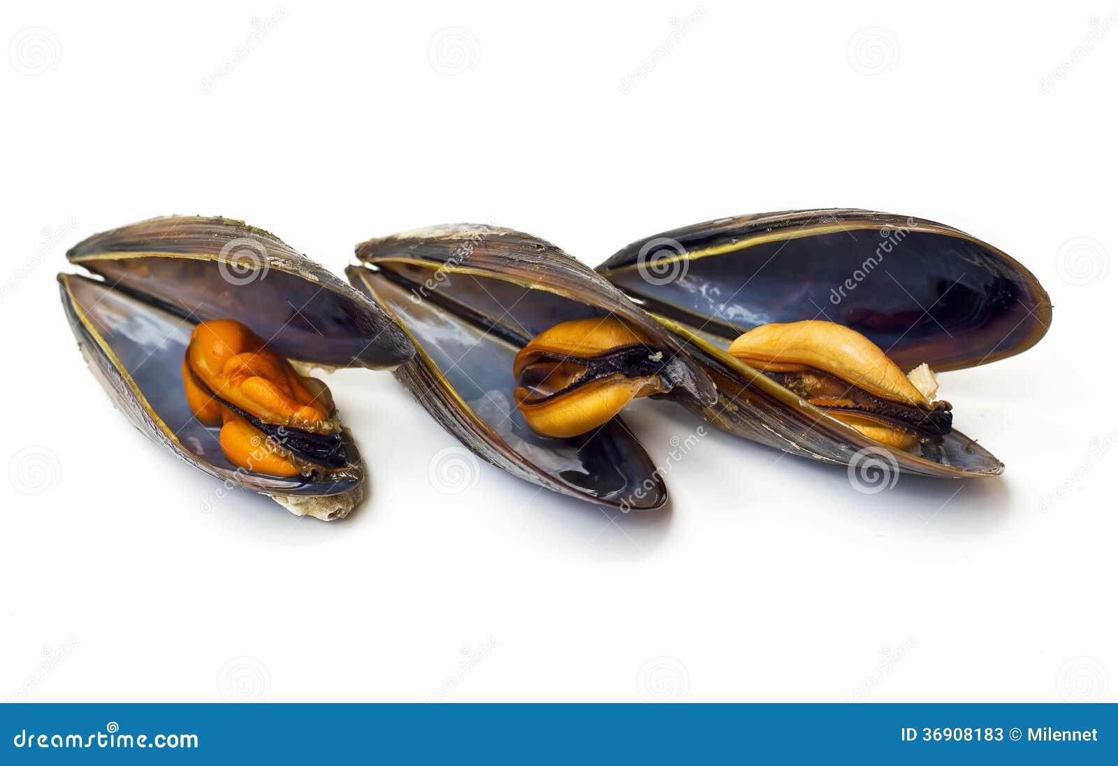Trzy gotującego mussels