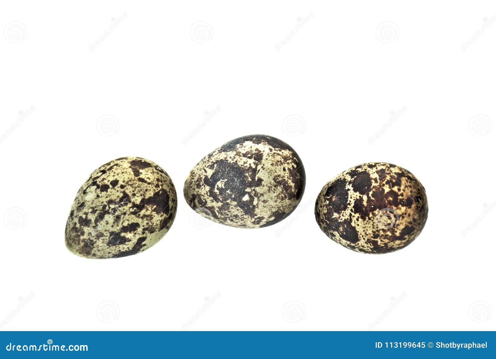 Trzy uroczego przepiórki jajka na wszystkie białym tle