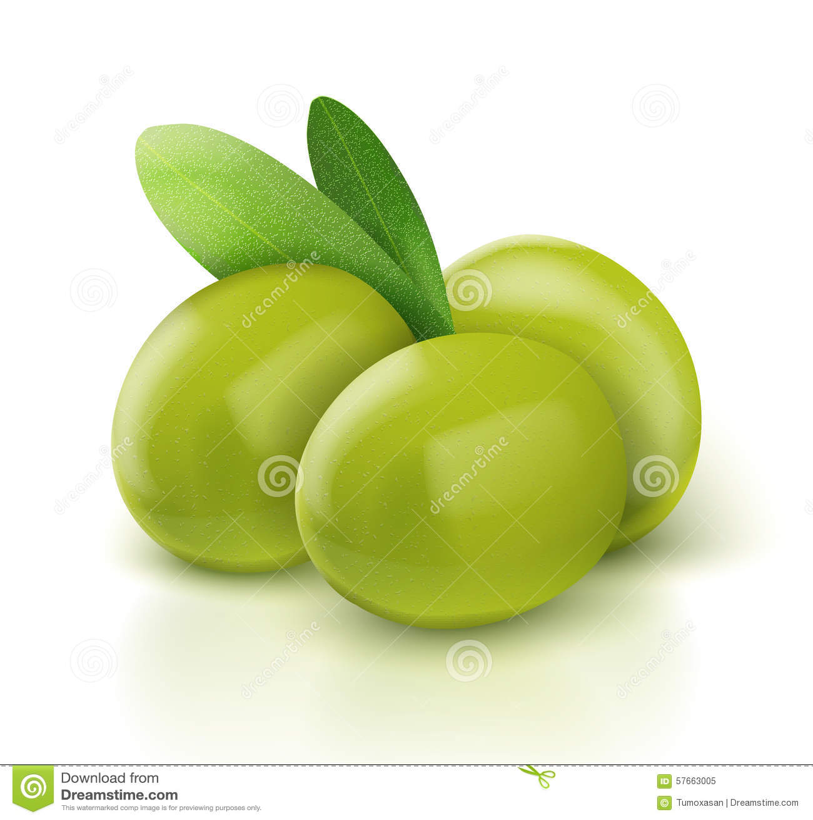 Trzy zielonej wektorowej oliwki