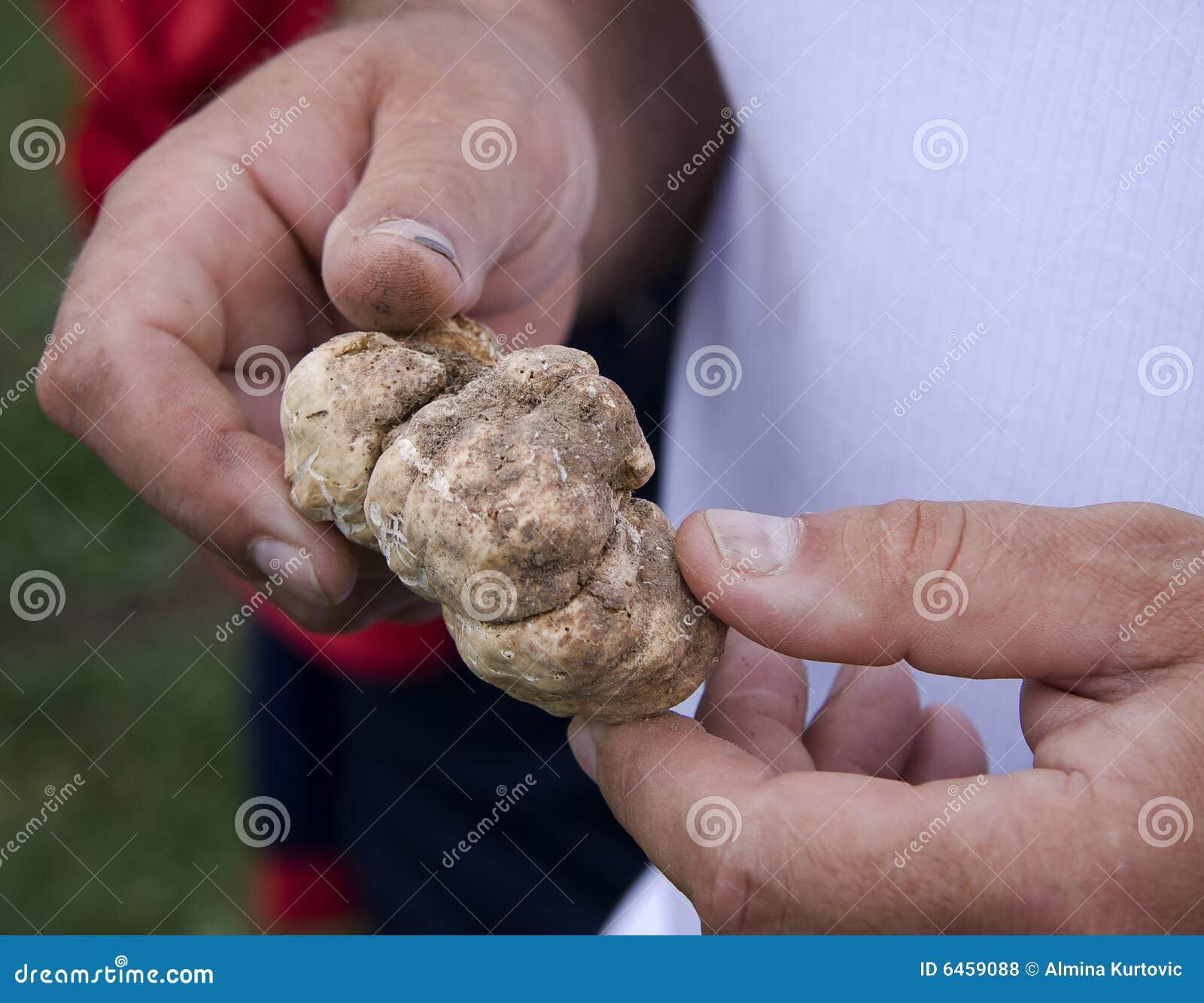 Trzymać grzyby