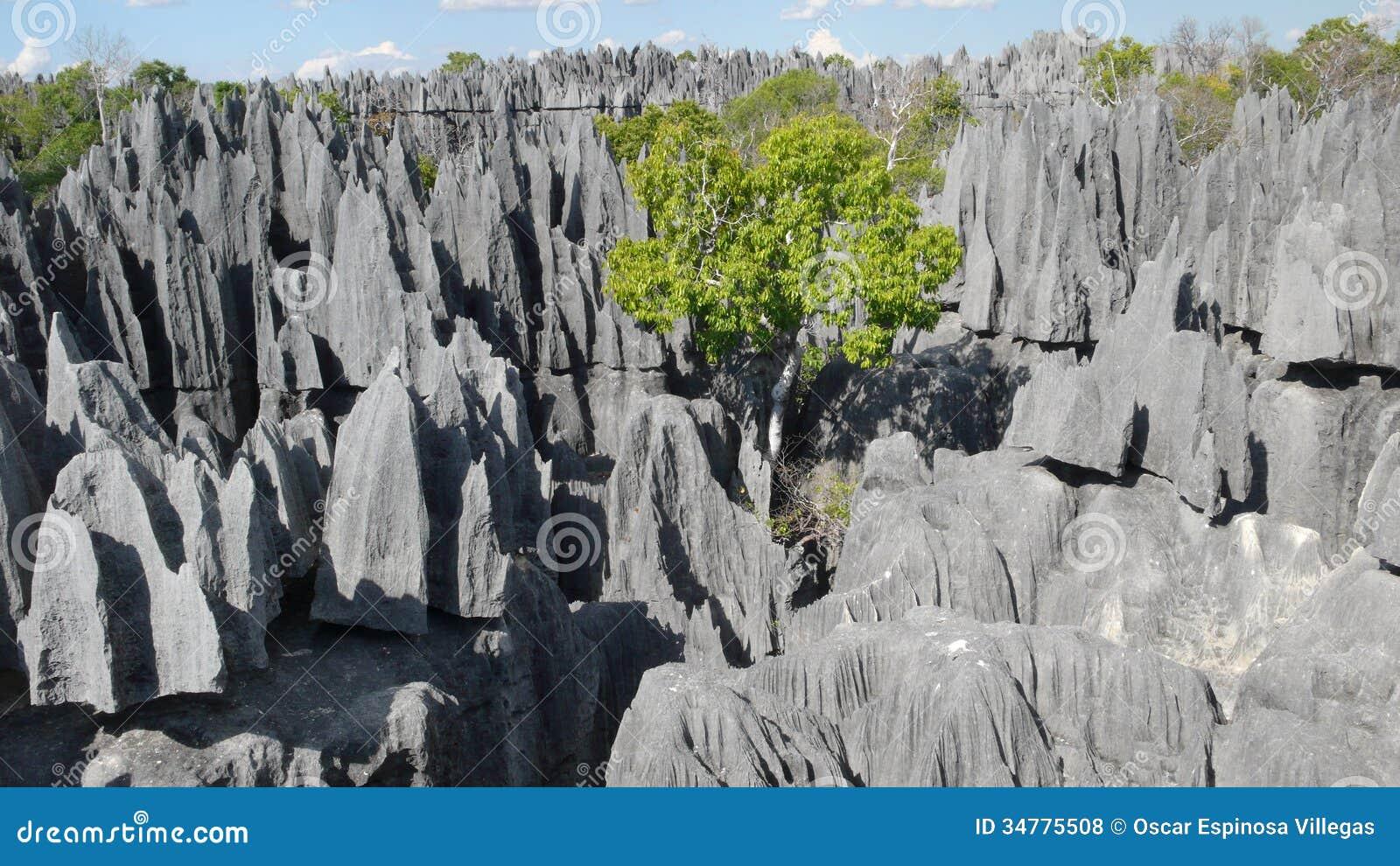 Tsingy de Bemaraha. Madagascar