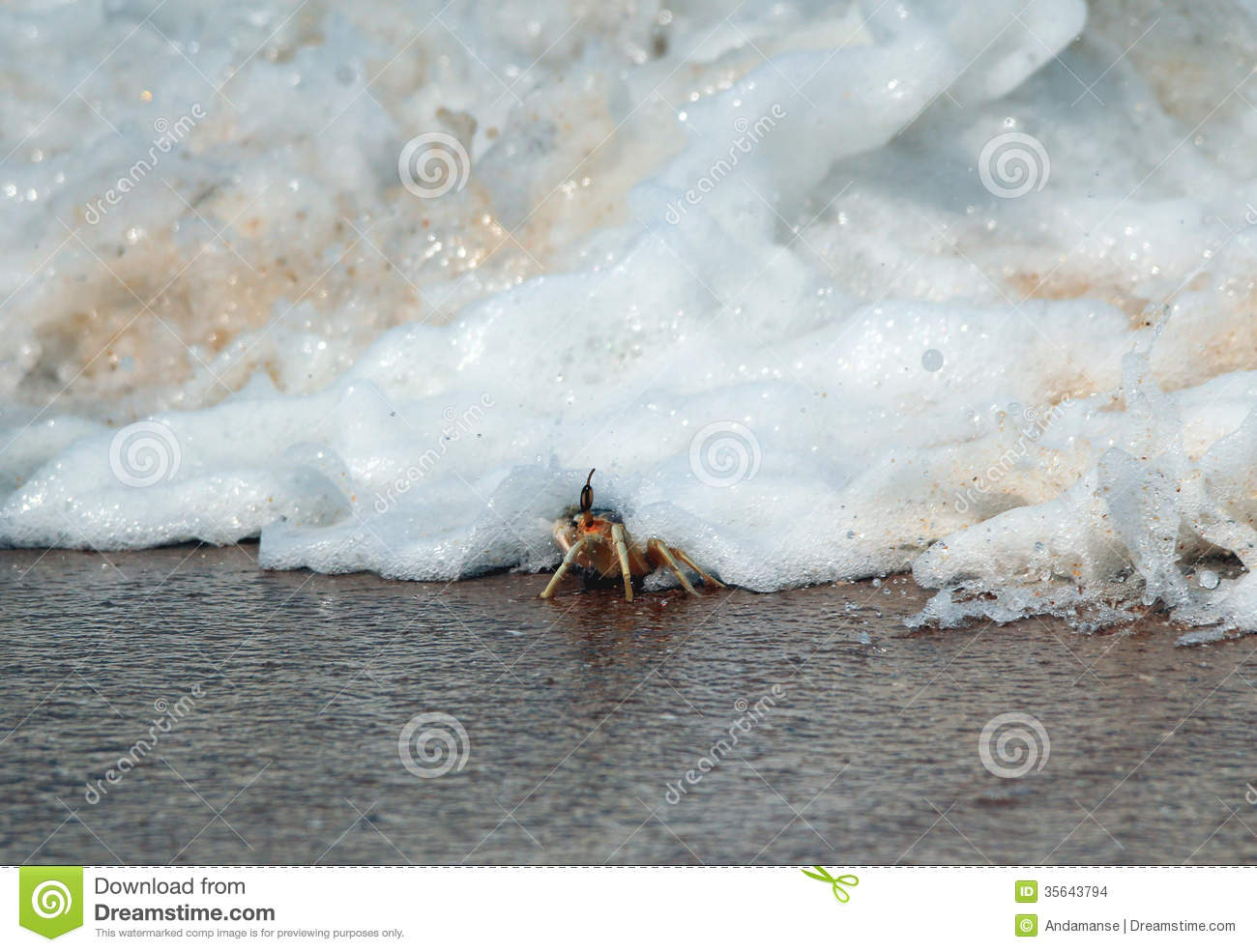 Stock Images Tsunami Tiny Crab Beach Just Getting Hit Wave Yala Sri Lanka Image35643794on Asteroid Impact Tsunami