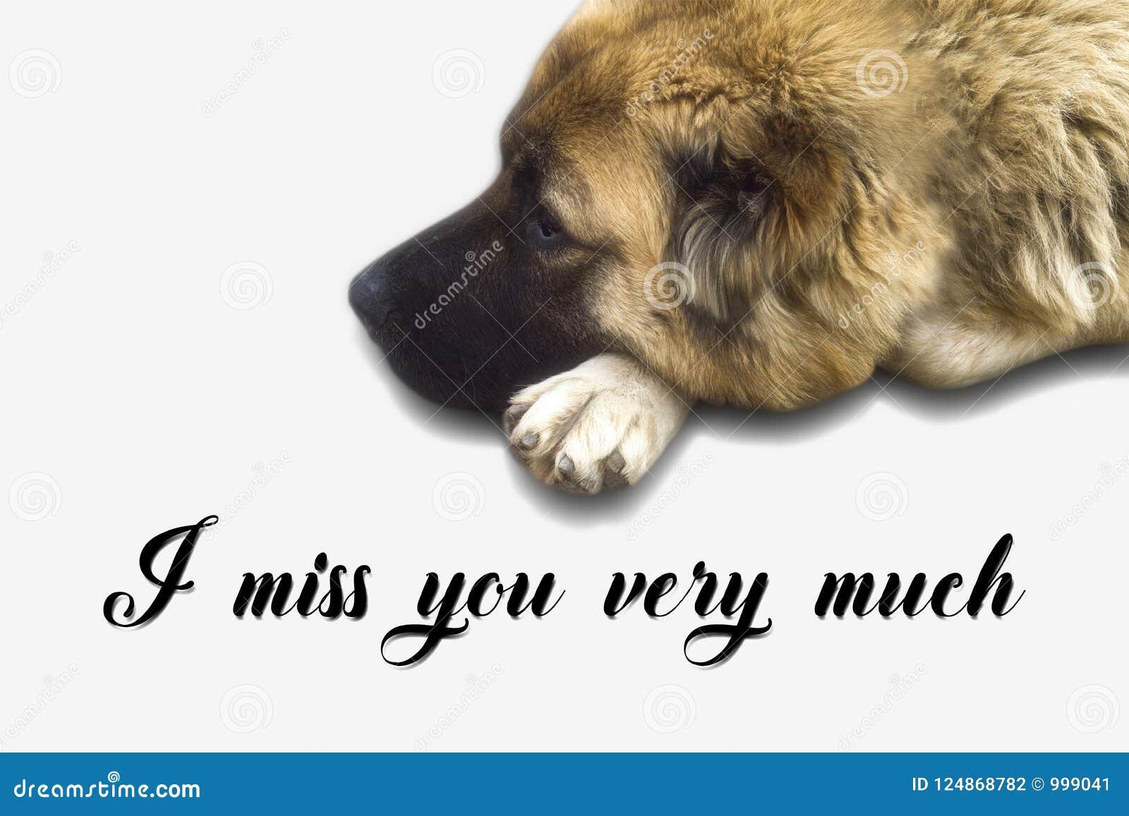 Tu me manque vraiment carte