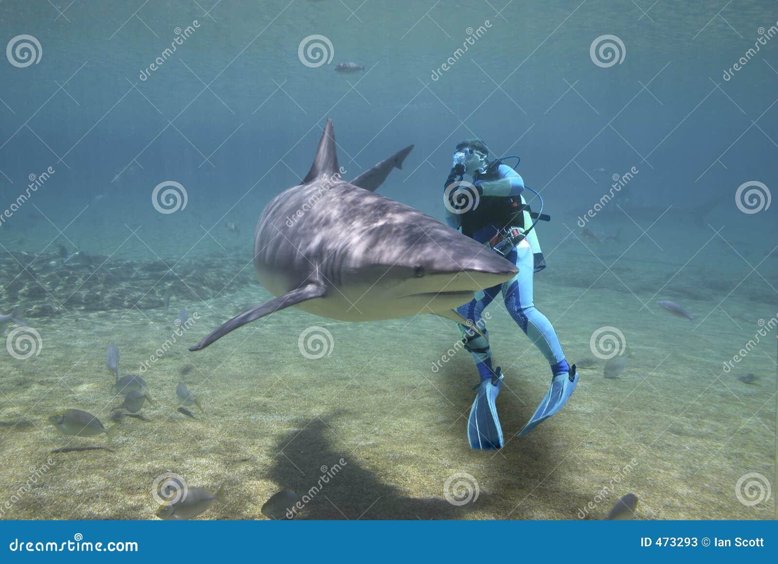 Tubarão de circundamento