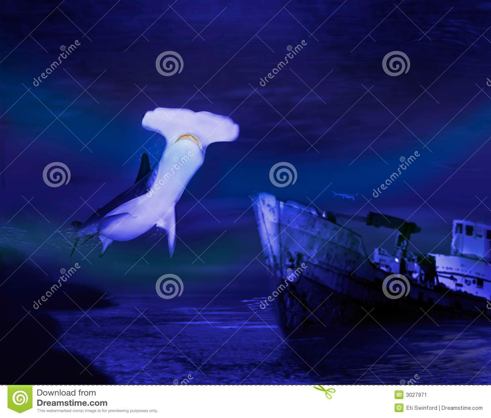 Tubarão de Hammerhead