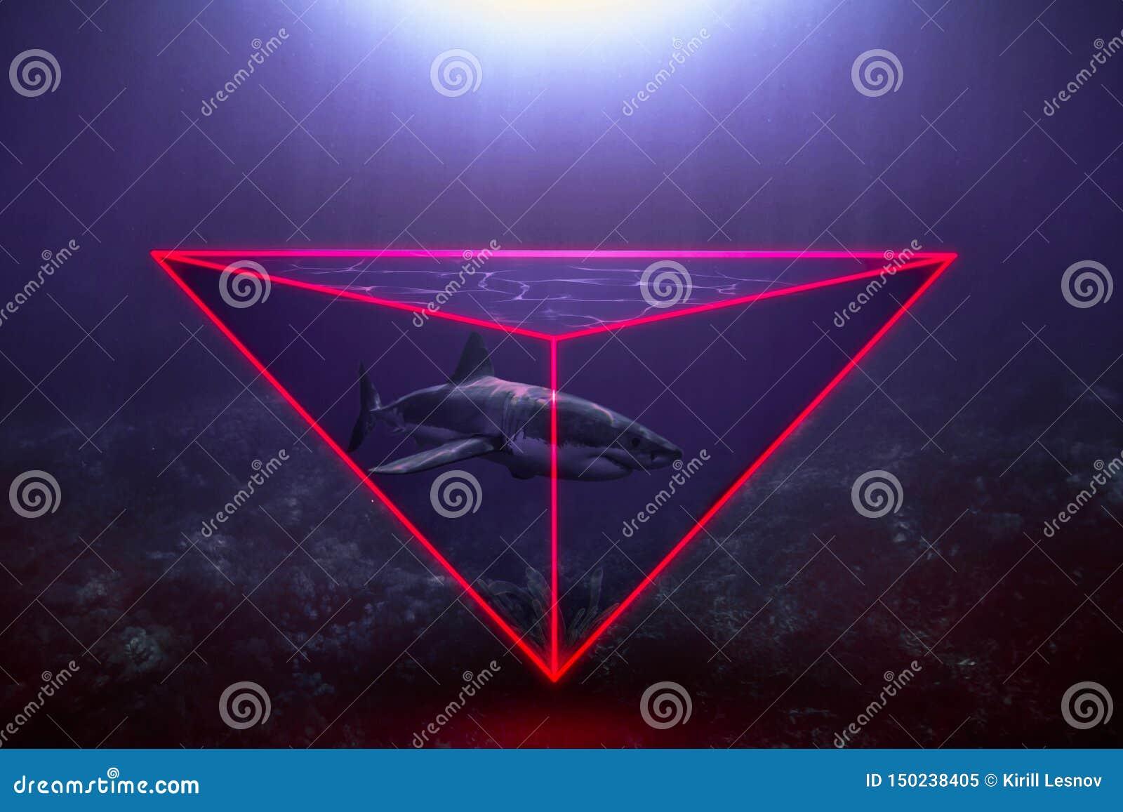 Tubarão de néon