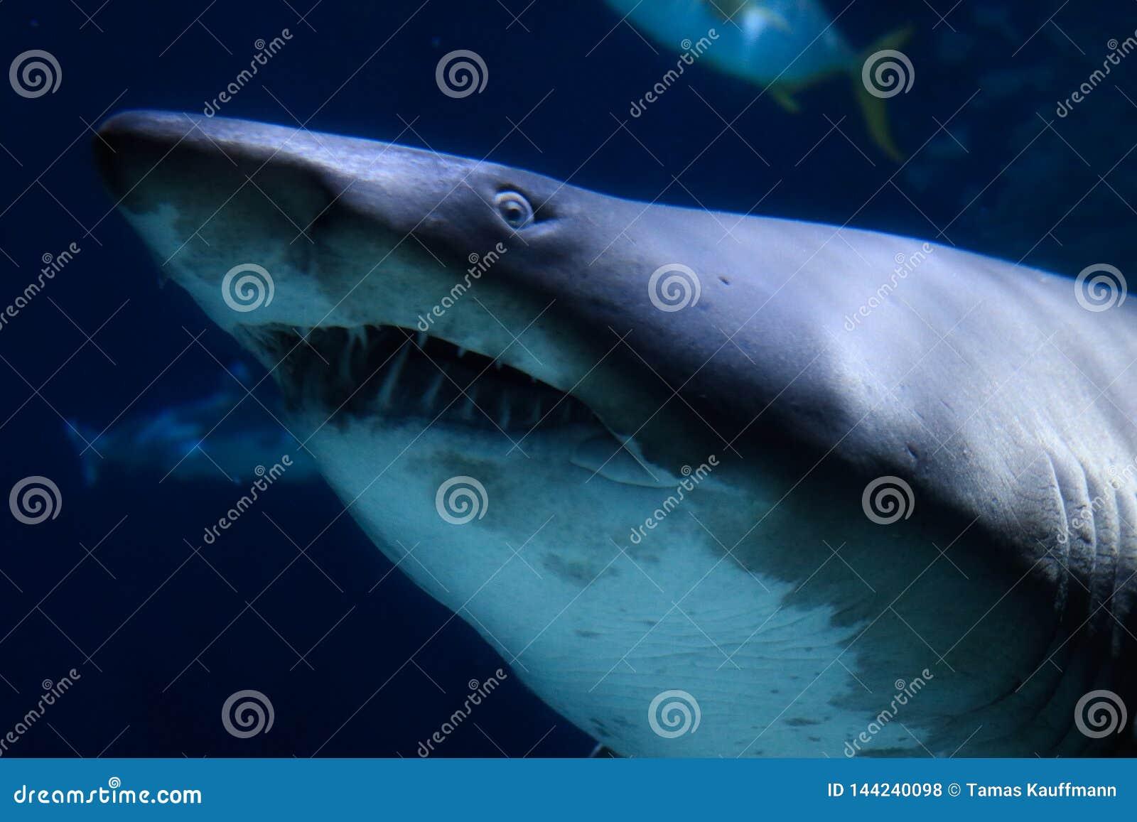 Tubarão no aquário da vida marinha em Banguecoque