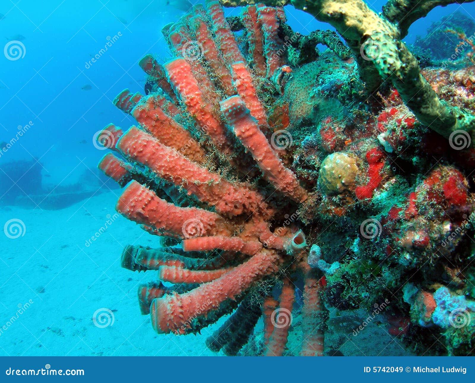 ... Zoo was taken at Barracuda Reef off the coast of Dania Beach, Florida