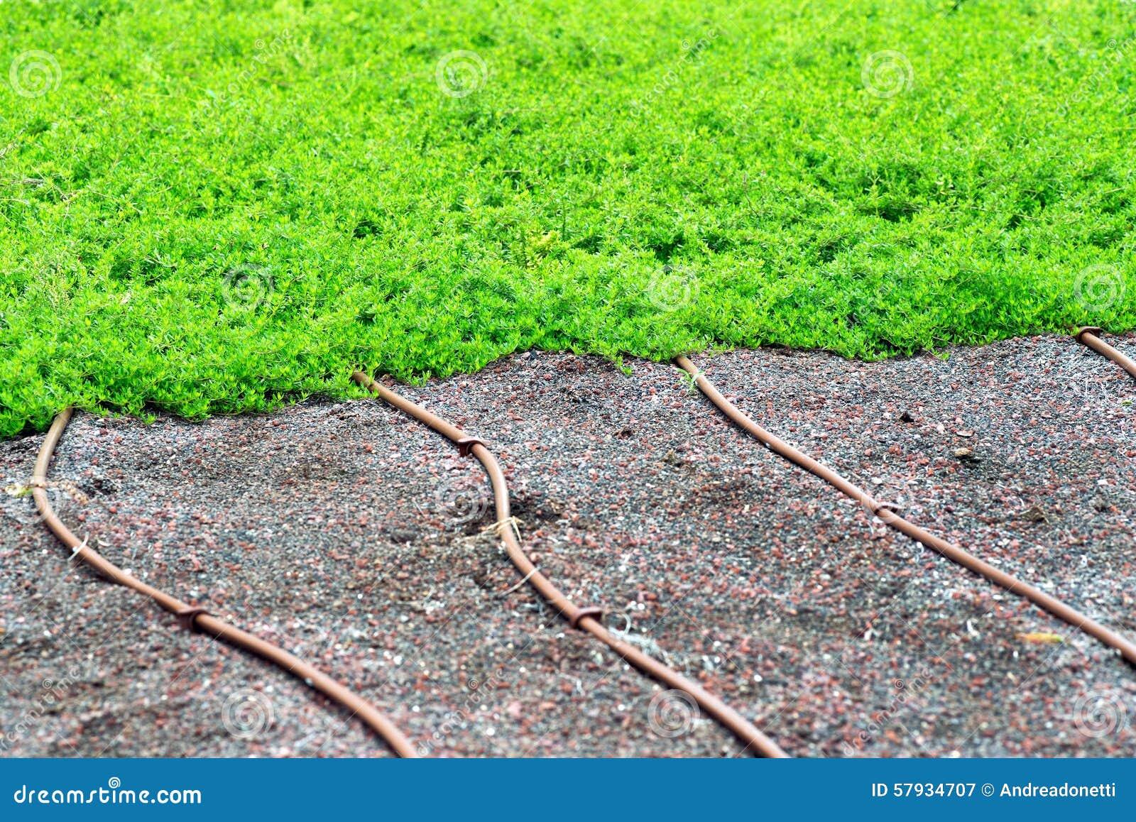 Tubi di irrigazione su un prato inglese o su un tappeto for Tappeto erboso a rotoli prezzi