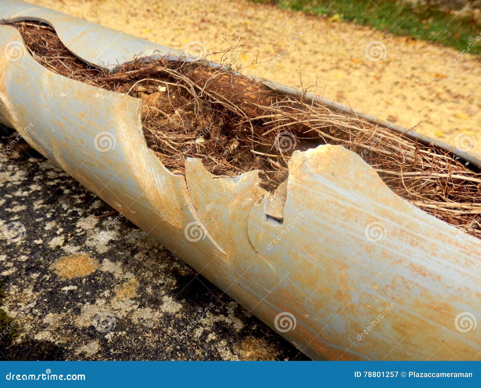 Tubo bloqueado del drenaje