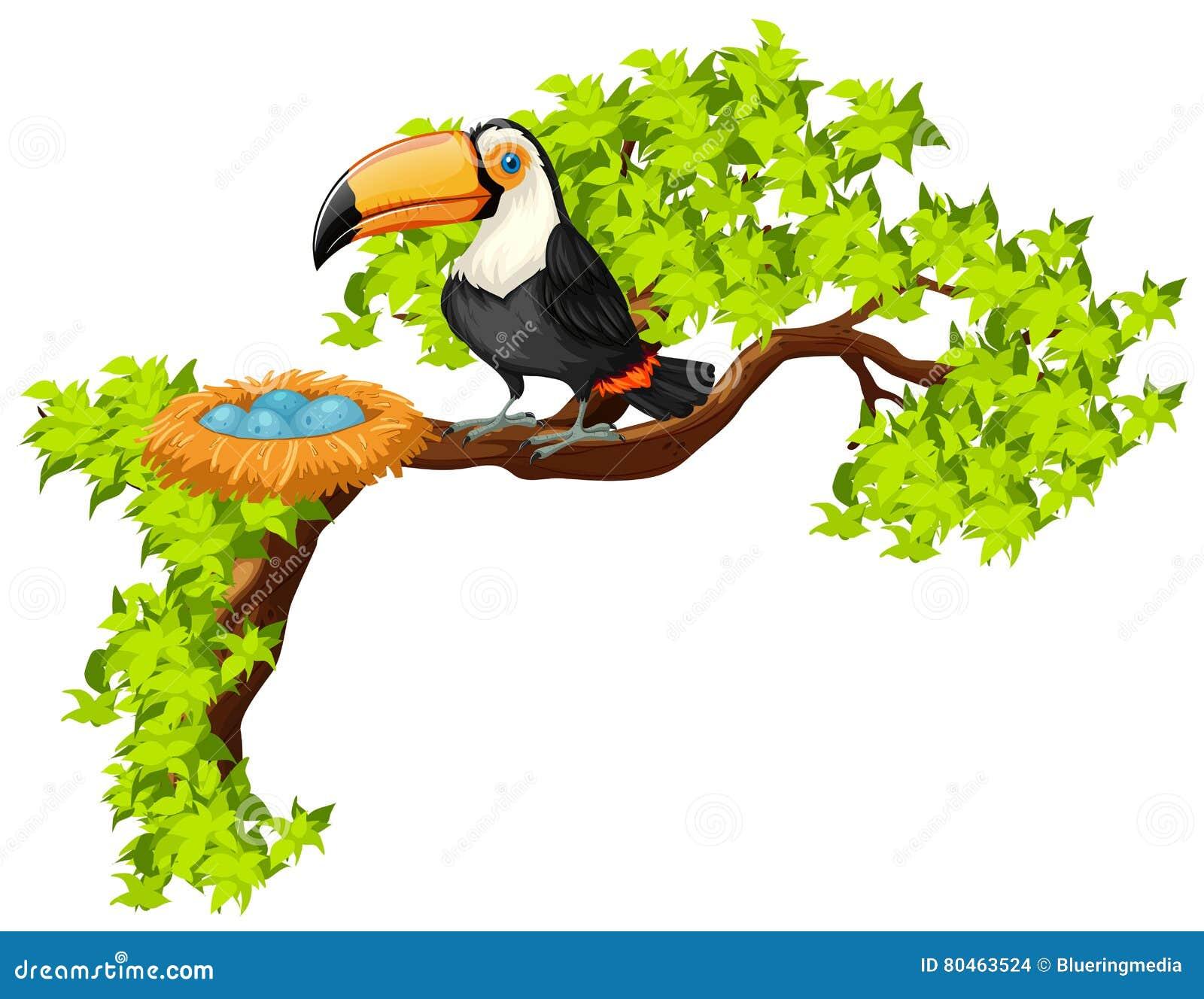 Tucán y jerarquía en el árbol