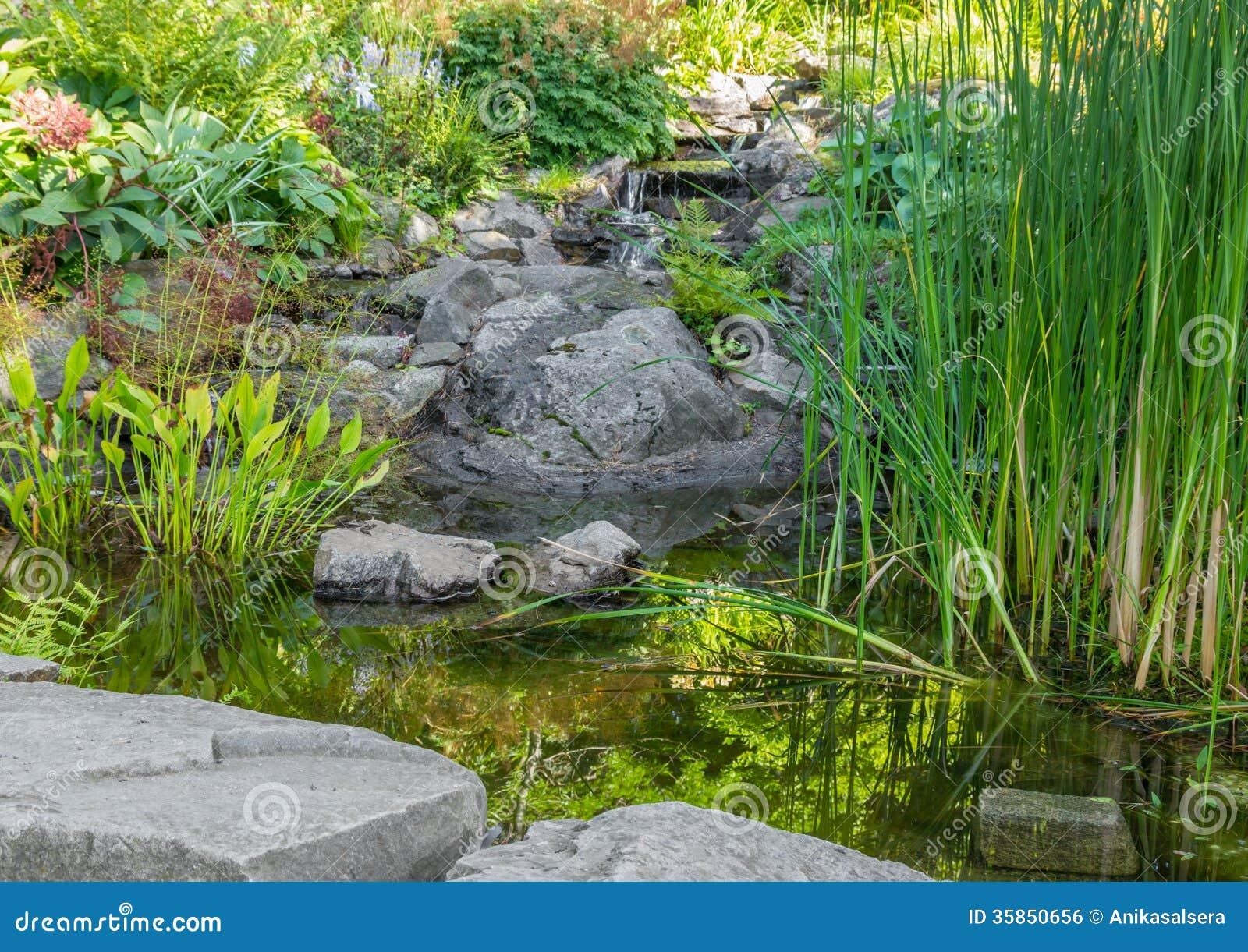 Tuin met aquatische installaties vijver en decoratieve stenen royalty vrije stock afbeelding for Tuin decoratie met stenen
