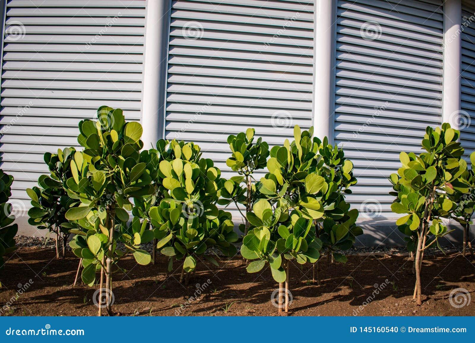 Tuin met groene boomgaard volledige hd