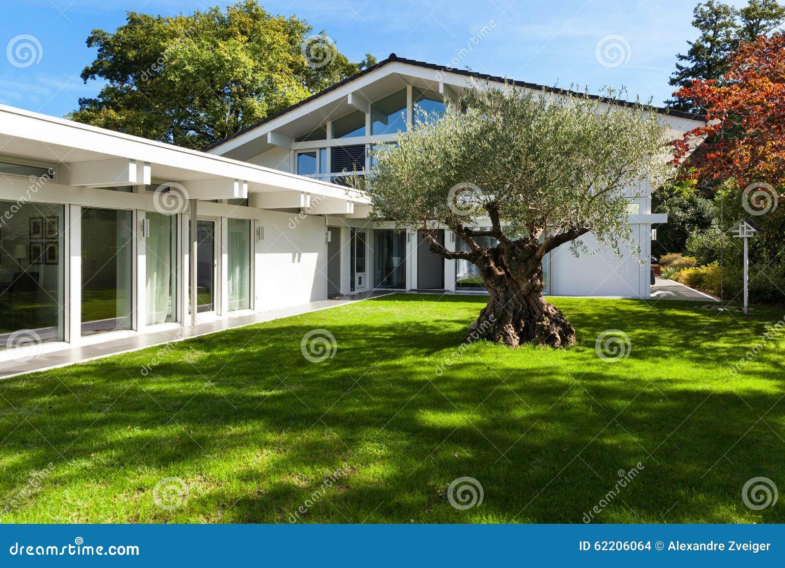 Tuin van een modern huis met olijfboom stock foto afbeelding