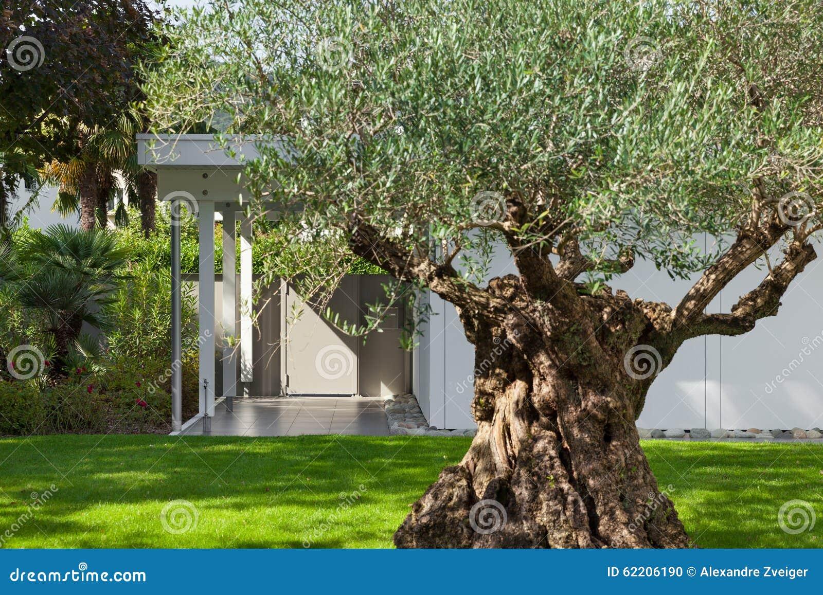 Tuin van een modern huis met olijfboom stock foto afbeelding 62206190 - Landscaping modern huis ...