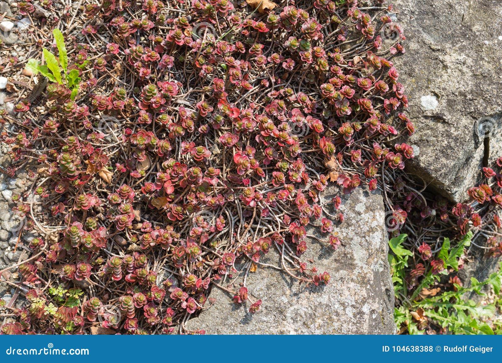 Download Tuin Van Het Zuiden De Duitse Plattelandshuisje Stock Foto - Afbeelding bestaande uit bloem, patroon: 104638388