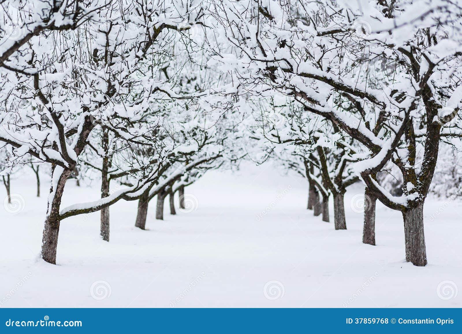 Tuinbomen in de winter