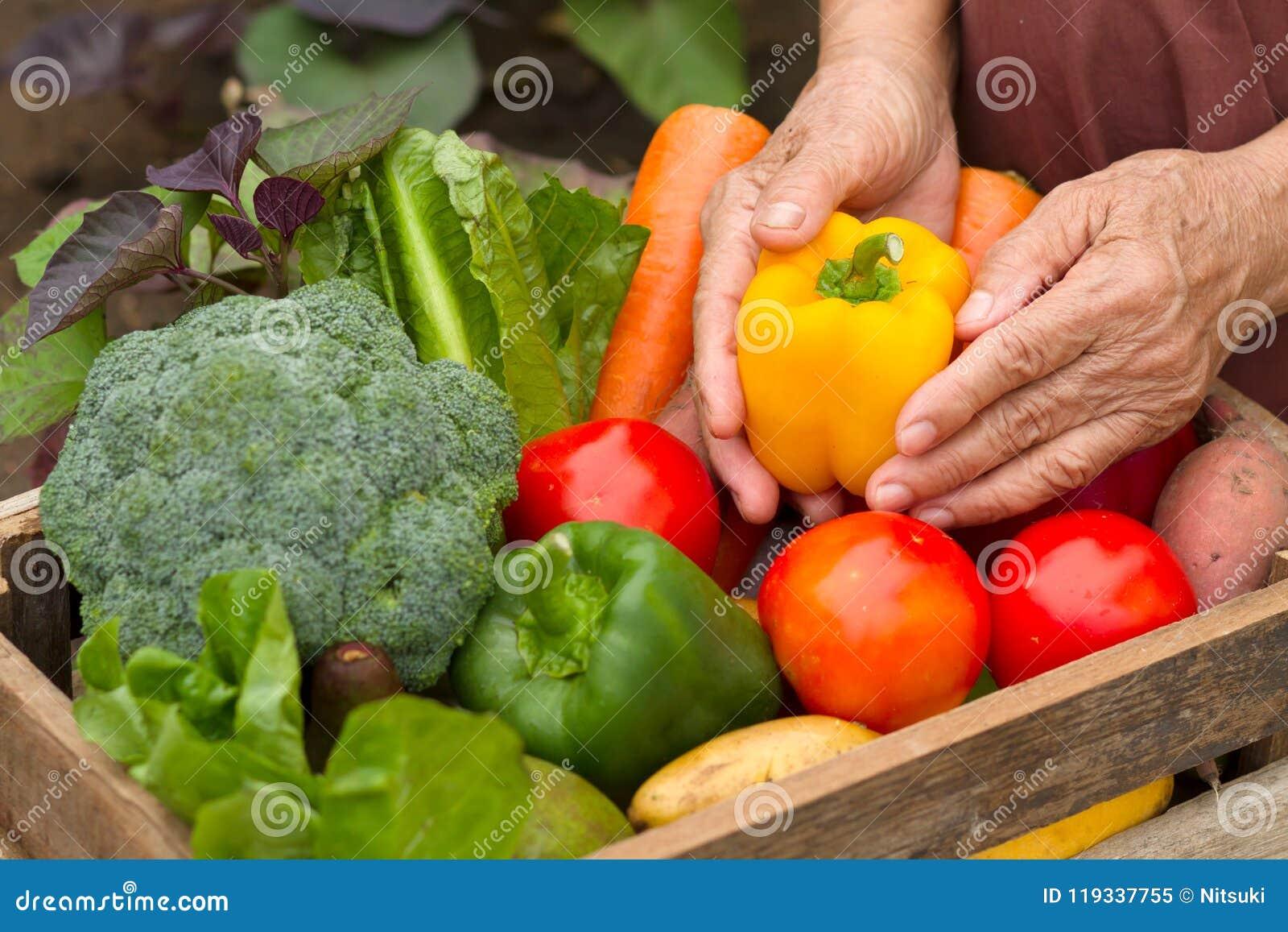 Tuiniert de oogst organische groente thuis, eigengemaakt product klaar aan verkoop