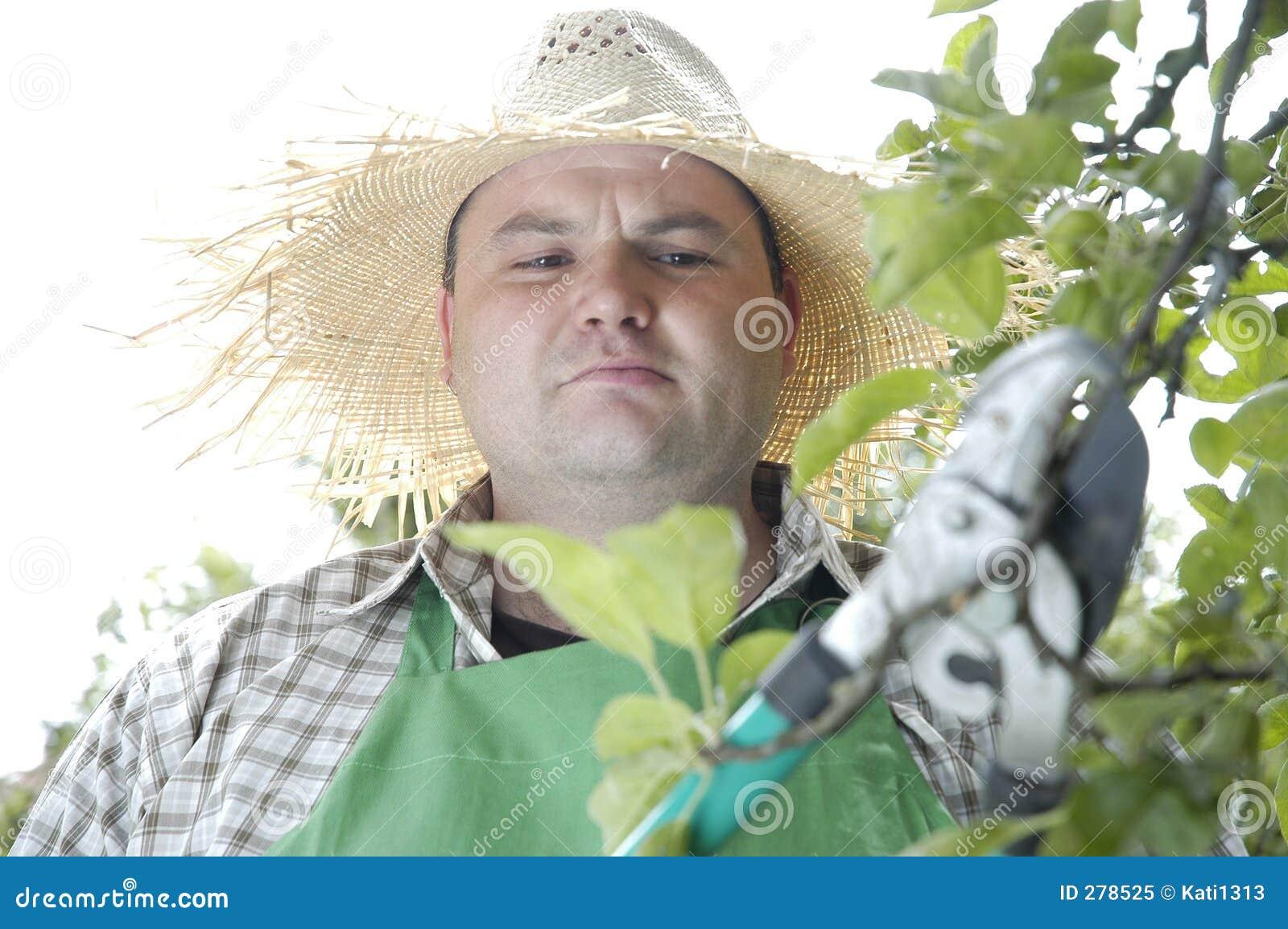 Tuinman: snoeiende scharen