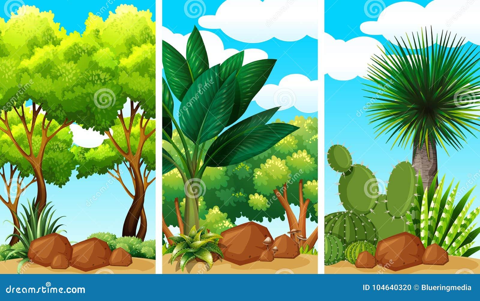 Download Tuinscènes Met Installaties En Rotsen Vector Illustratie - Illustratie bestaande uit hemel, palm: 104640320