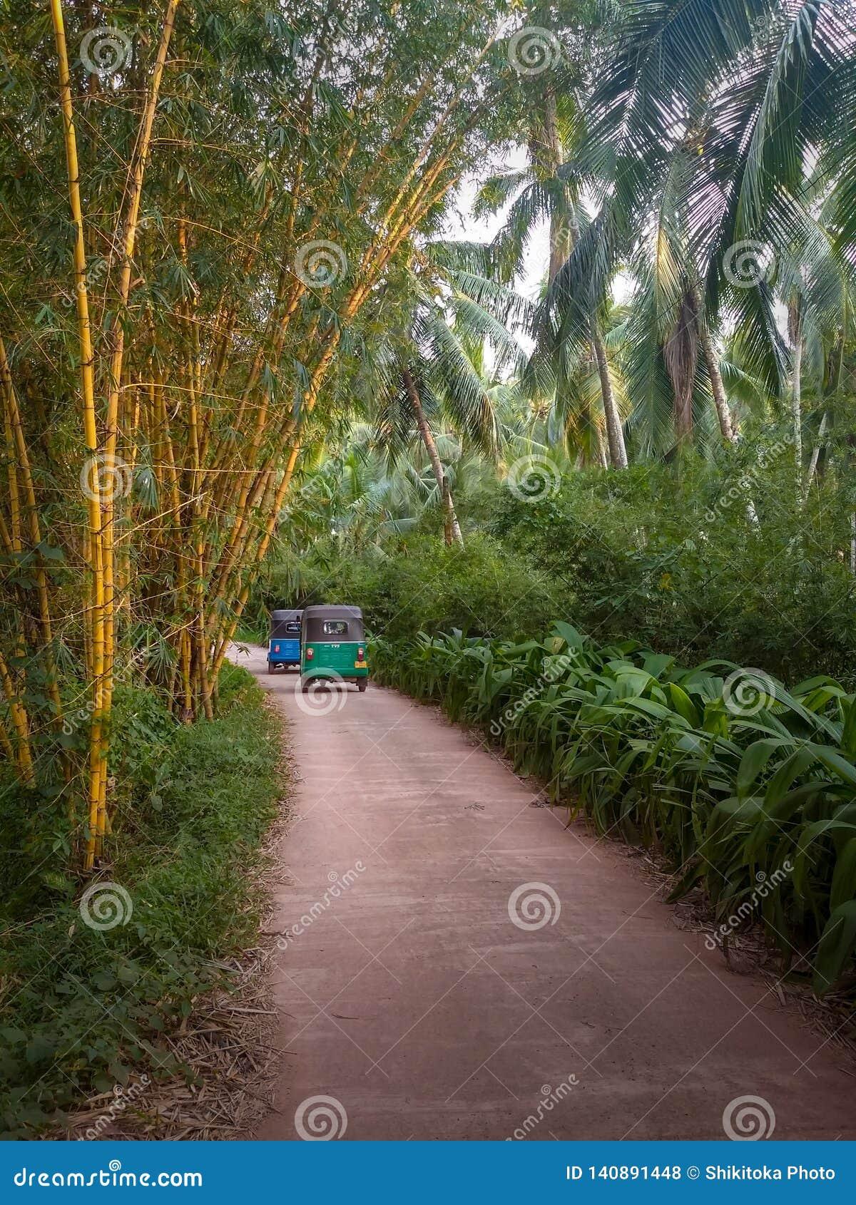 Tuk Tuk in der Bambus- und Palmenut