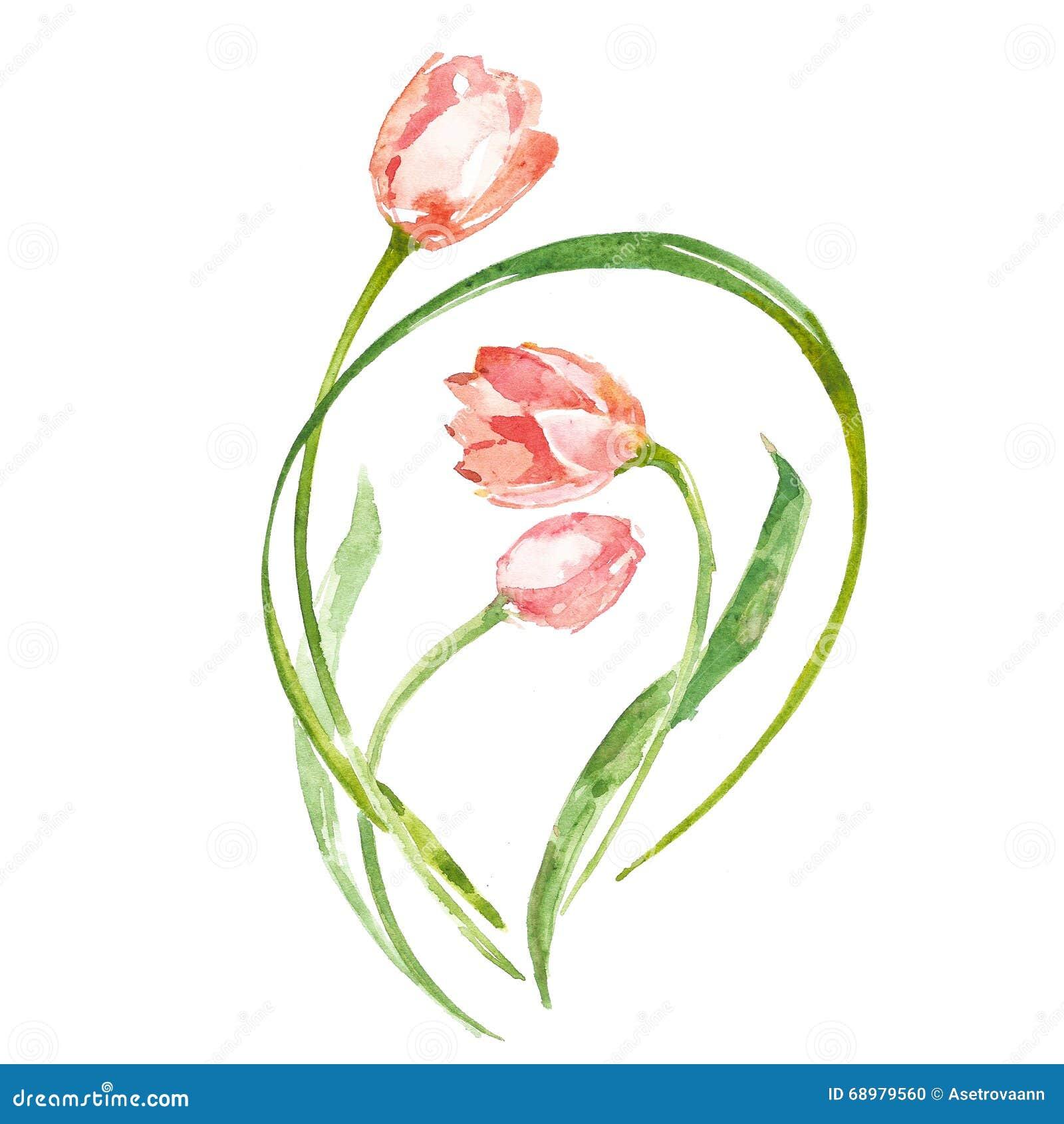 Tulipán de la flor de la acuarela
