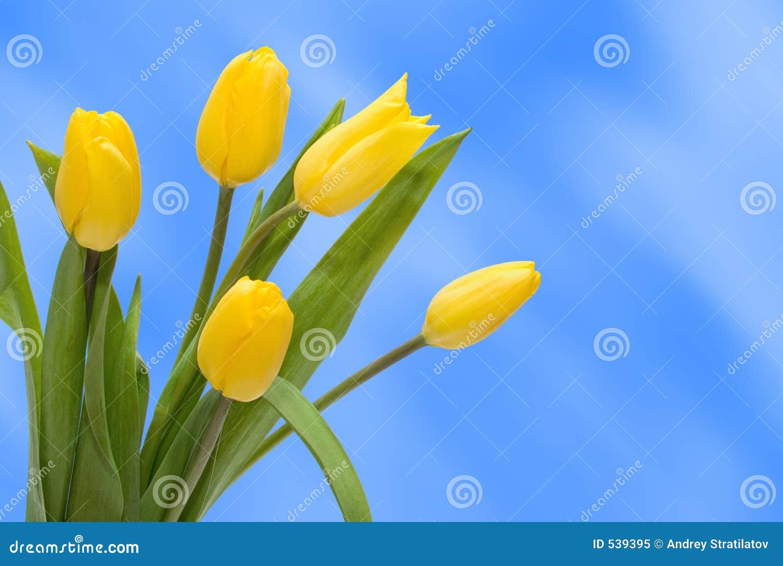 Tulipán del ramo