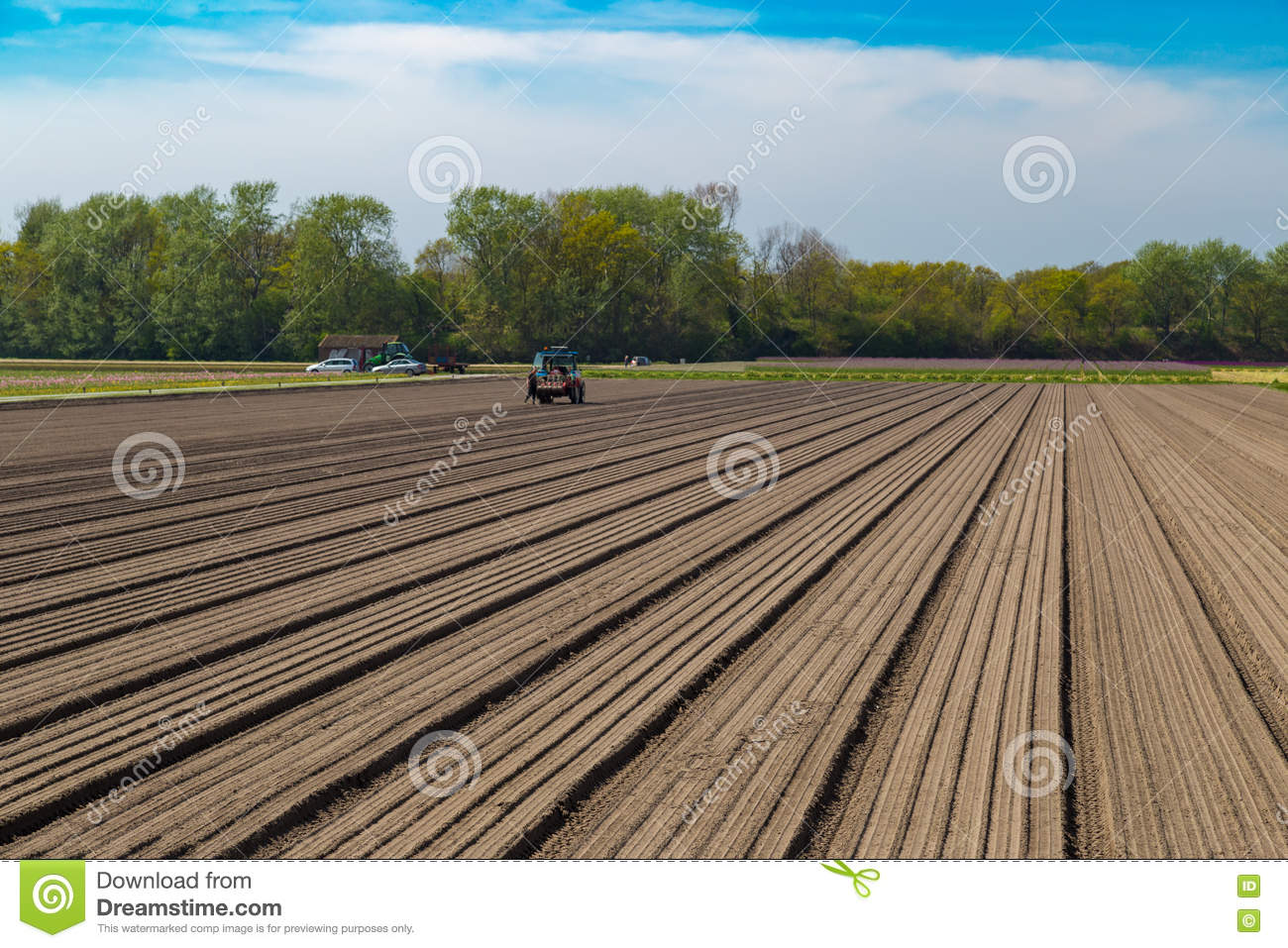 29d32bf6b Tulip bulb field with bare soil and tractor after harvest near village of  Lisse, the Netherlands