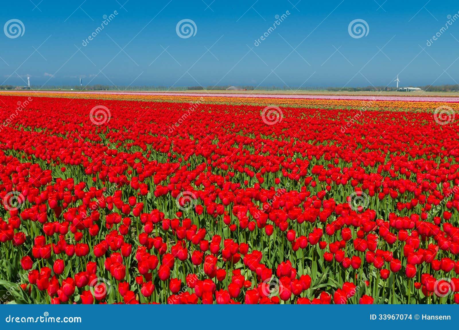 netherlands tulip fields map 28 images Netherlands