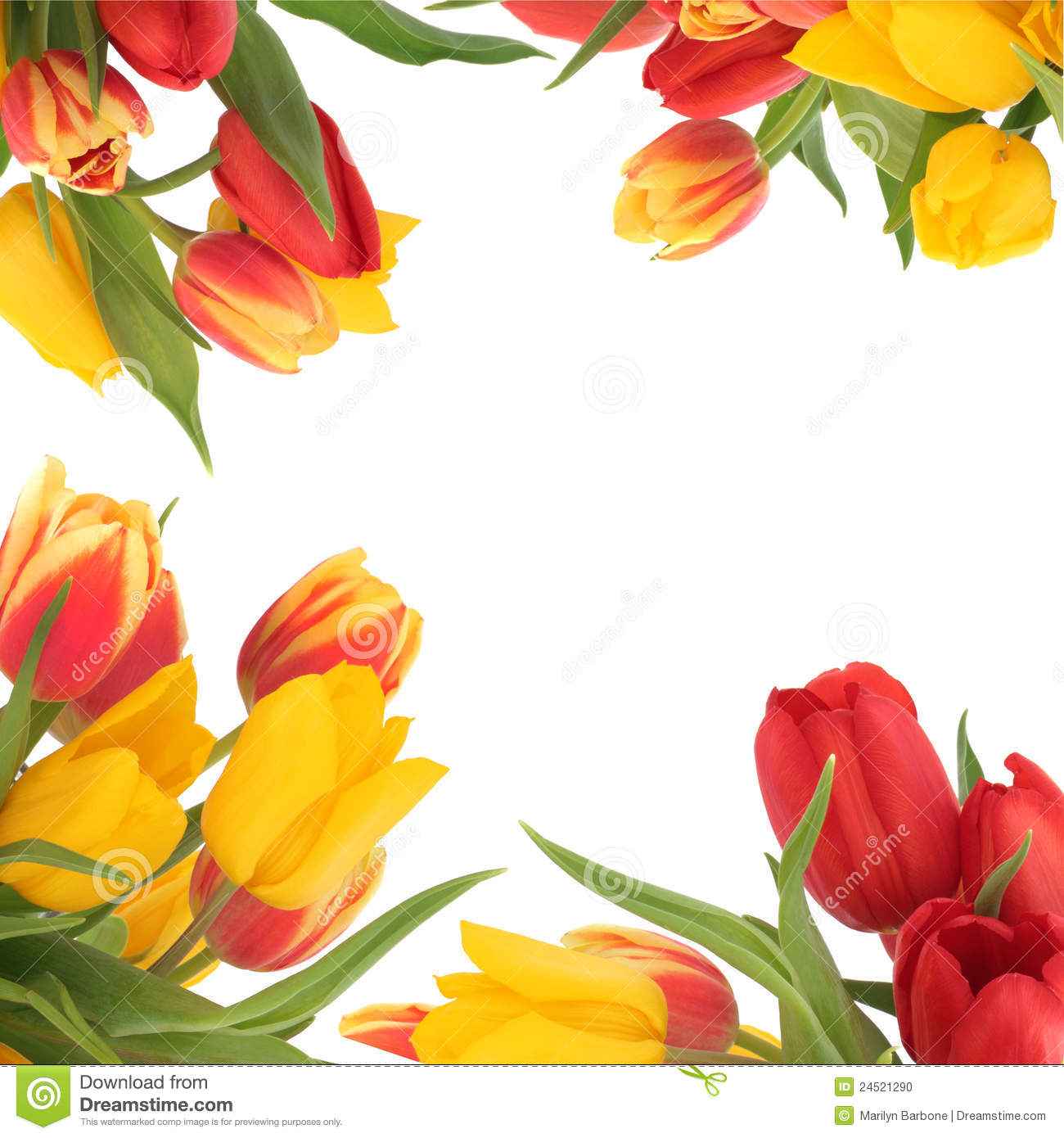 Tulip Flower Border Stock Photo - Image: 24521290
