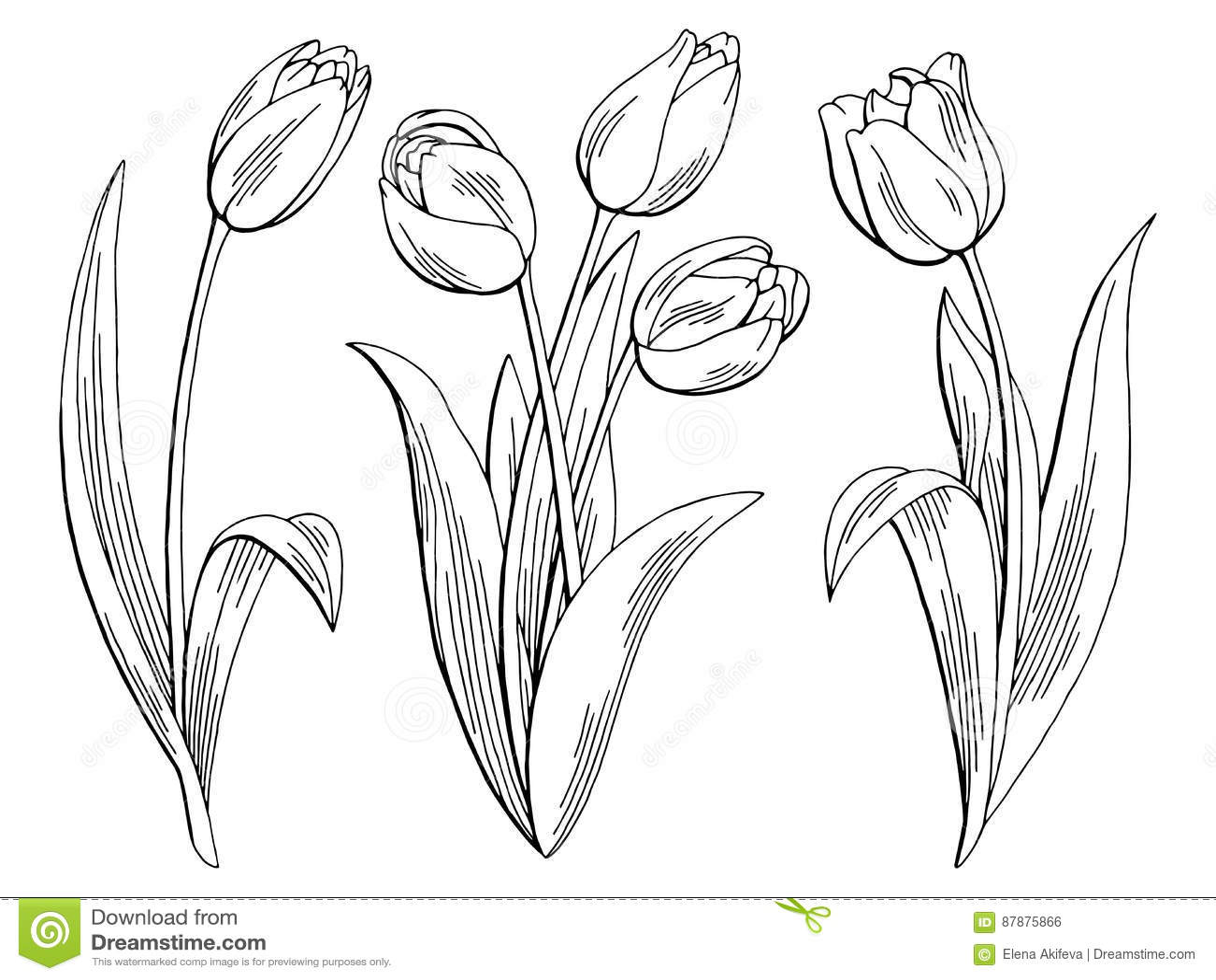 tulip flower graphic black white isolated sketch illustration stock