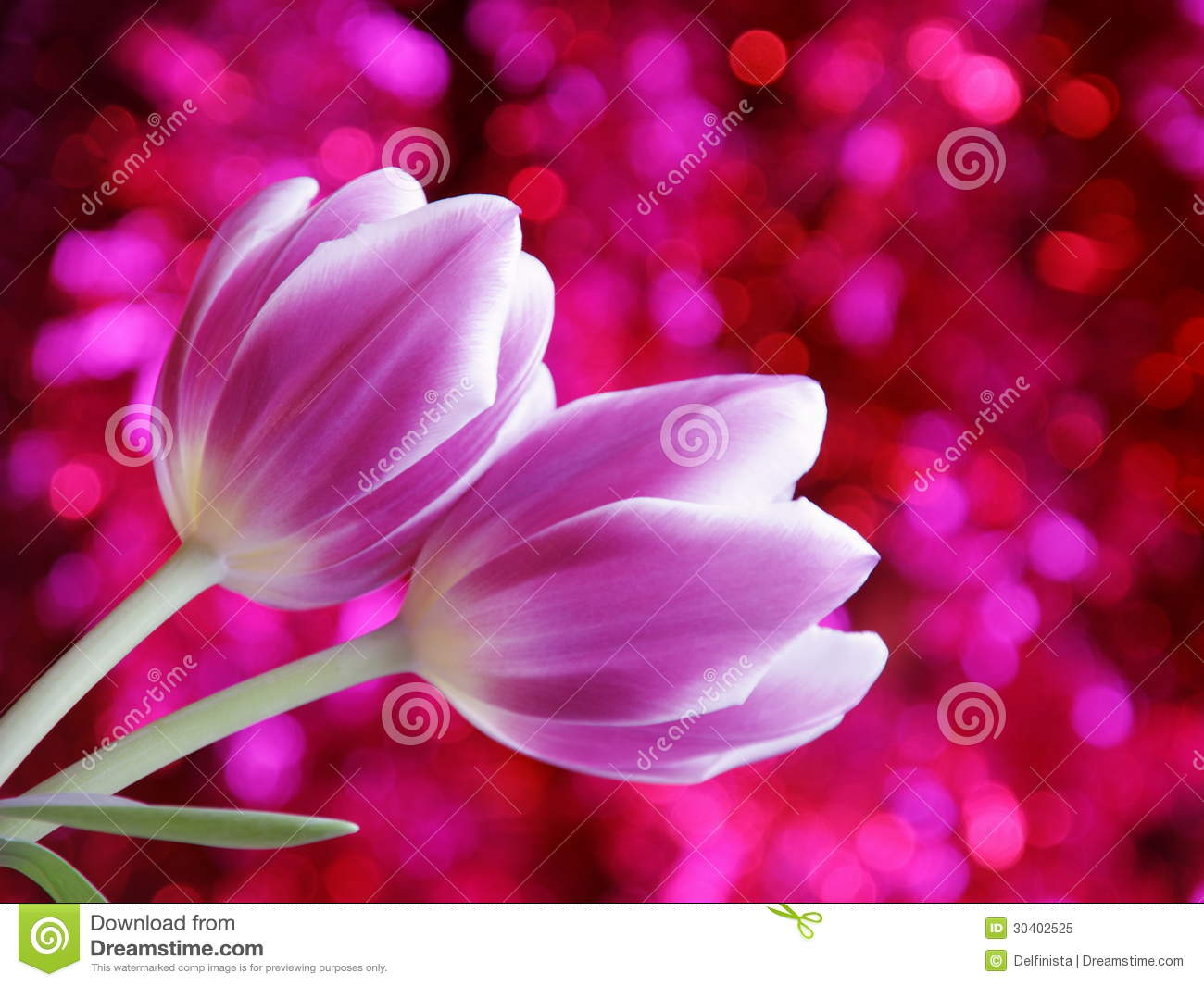 Tulip Flower Valentines Day Card - Stock Photo