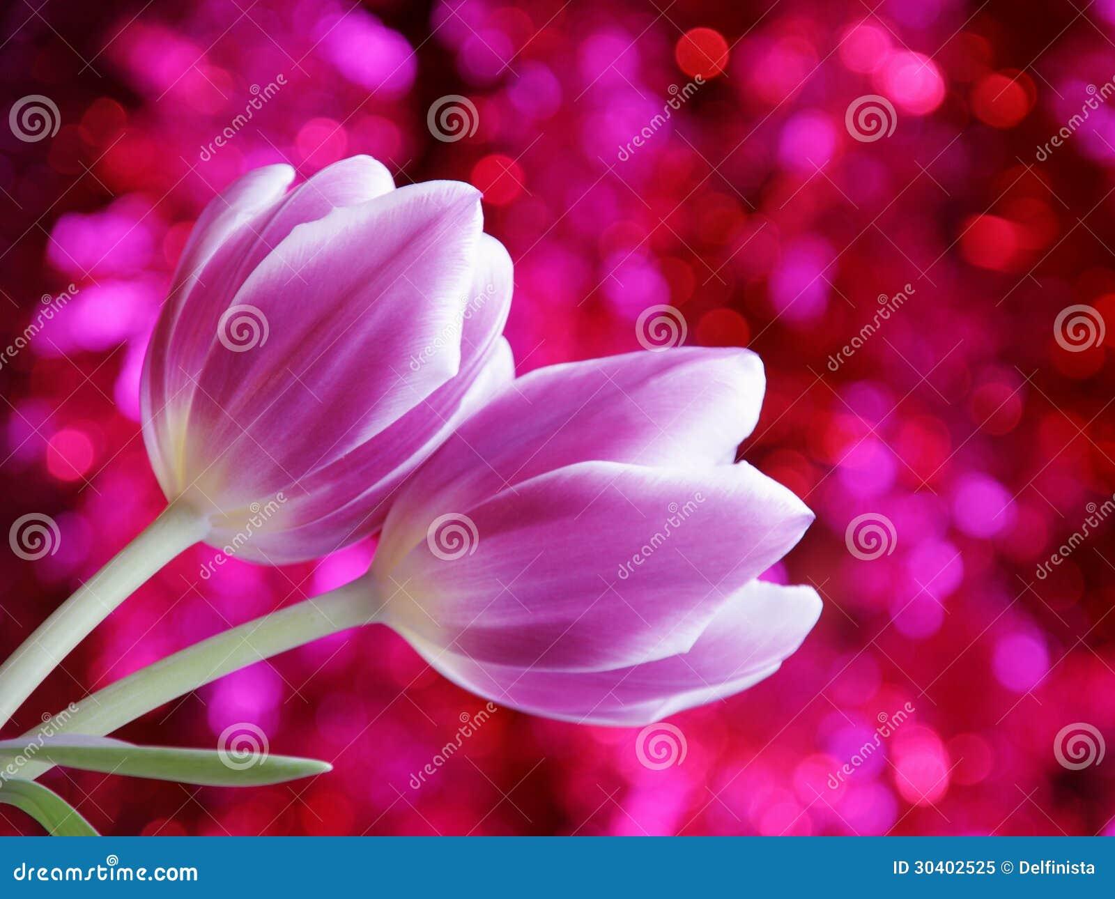 Tulip Flower Valentines Day Card - Voorraadfoto
