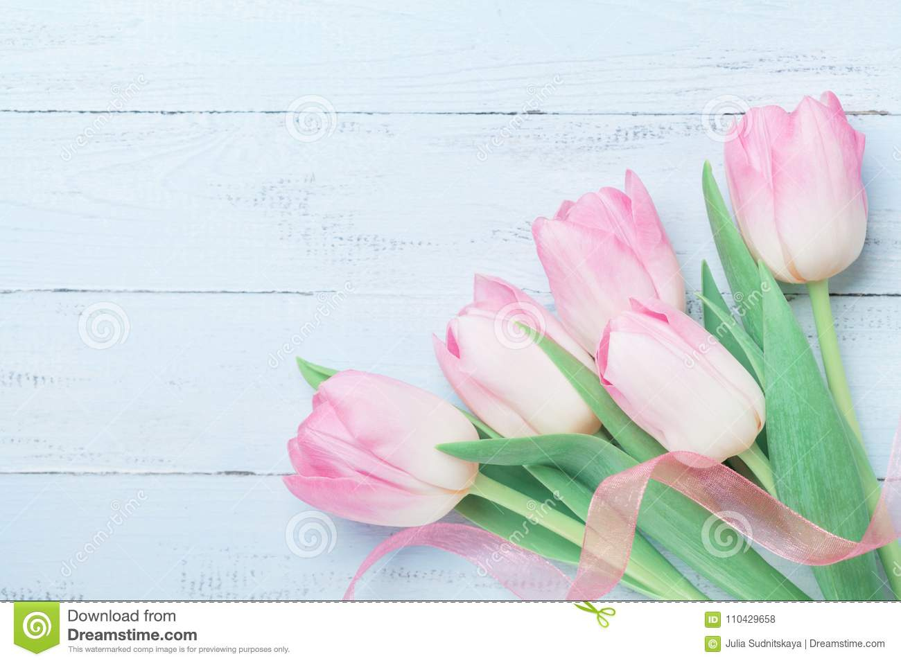Tulip flowers decorated ribbon on blue table for Womans or Mothers day. Beautiful spring card. Top view.
