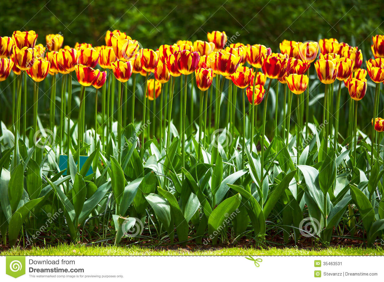 Royalty Free Stock Photo. Download Tulip Flowers Garden ...