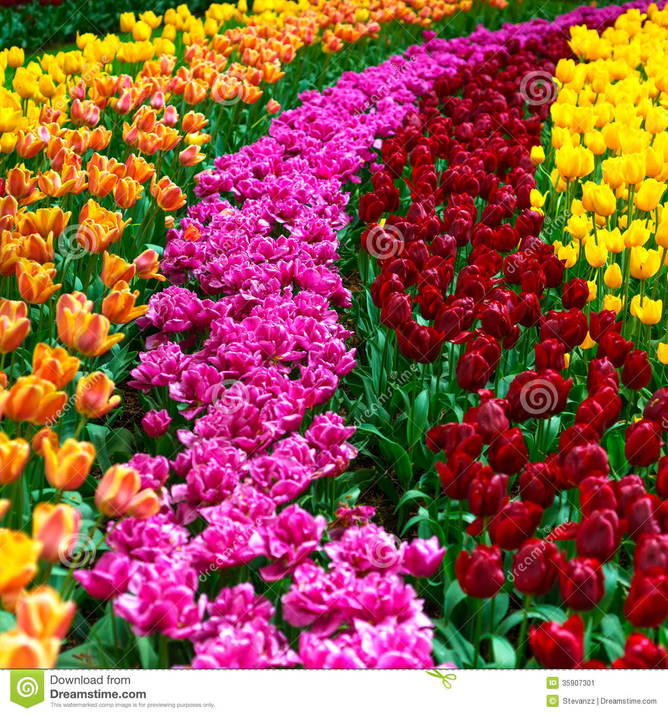 Garden Design With Tulip Flowers Garden In Spring Background Or Pattern  Stock Image With Landscaping Design