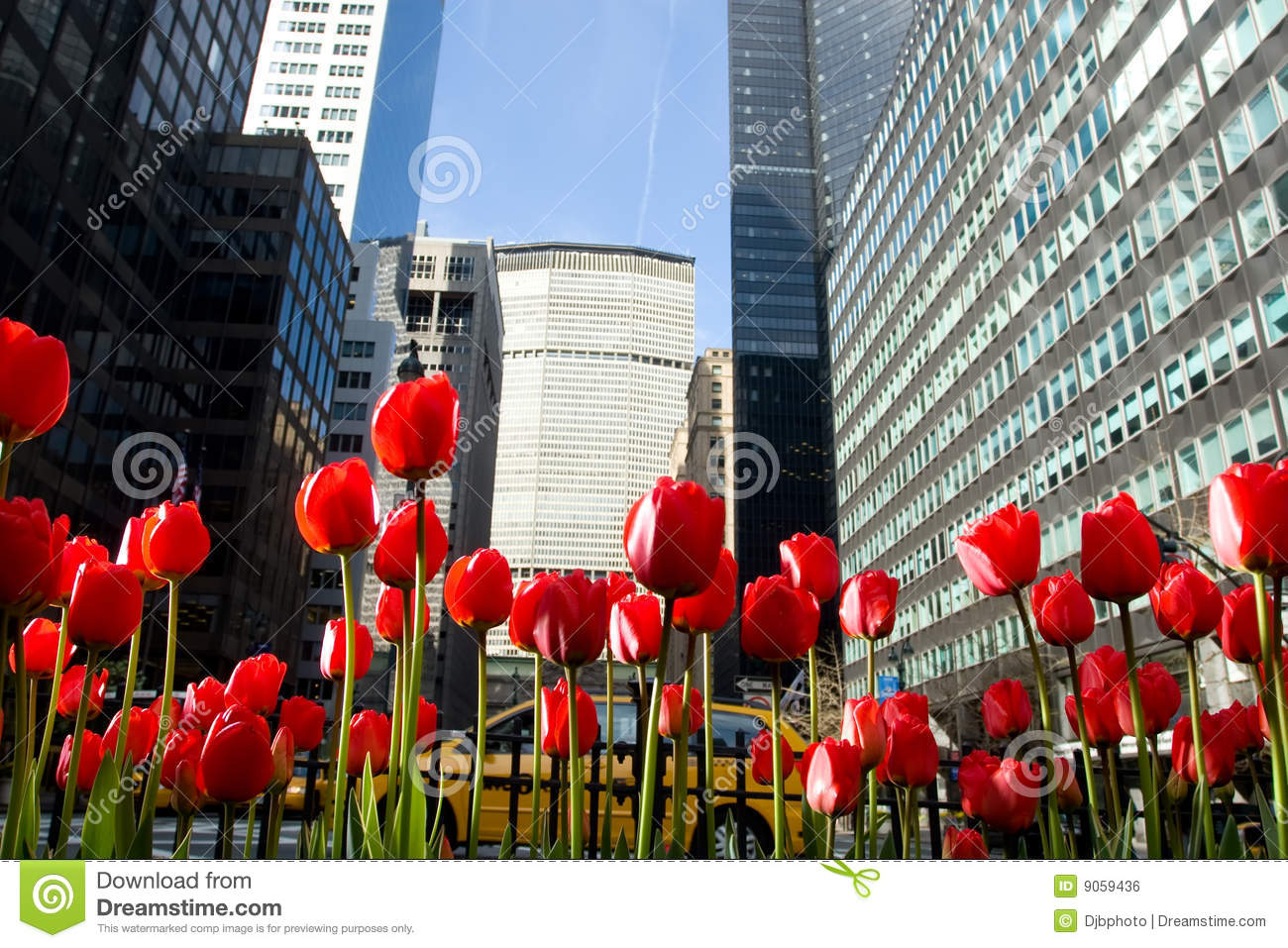 Tulip Flowers In New York City Park Royalty Free Stock Image Image