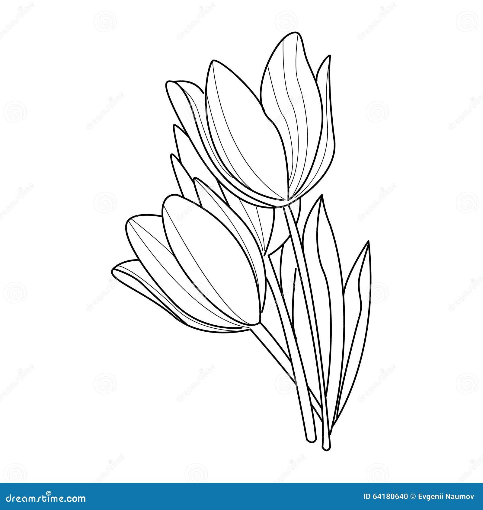 Tulip Flowers Sketch Vector Stock Image 64180640