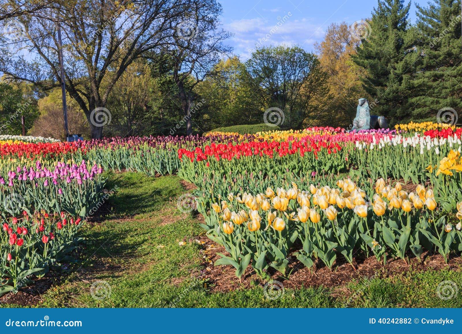 Tulip Garden Netherlands Carillon Arlington Virginia