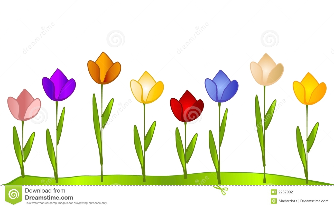 Tulip garden row of tulips stock illustration for Garden design graphics