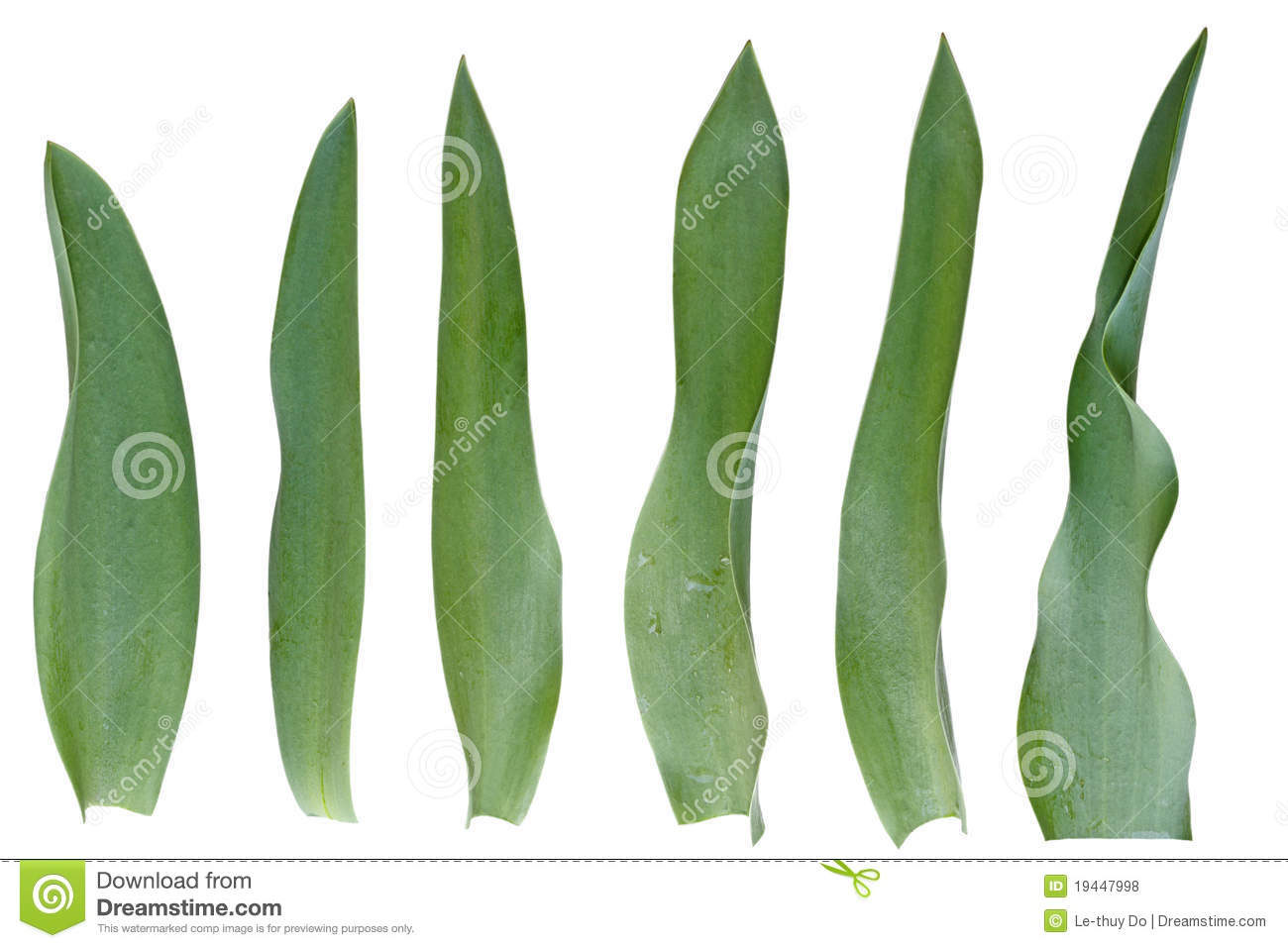 Tulip Leaf Set Royalty Free Stock Photos - Image: 19447998