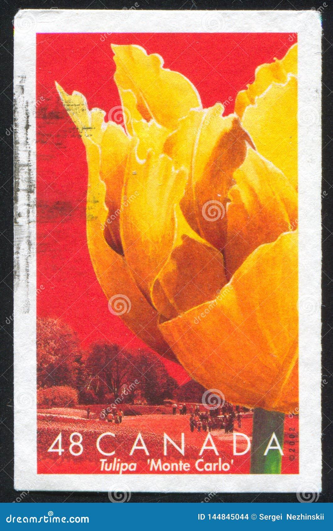 Tulip Monte Carlo