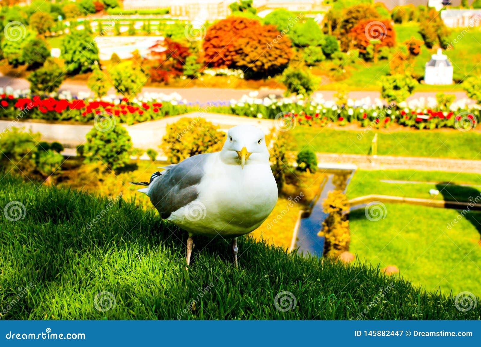 Tulip?n muy bonito y hermoso como una campana en el primero plano