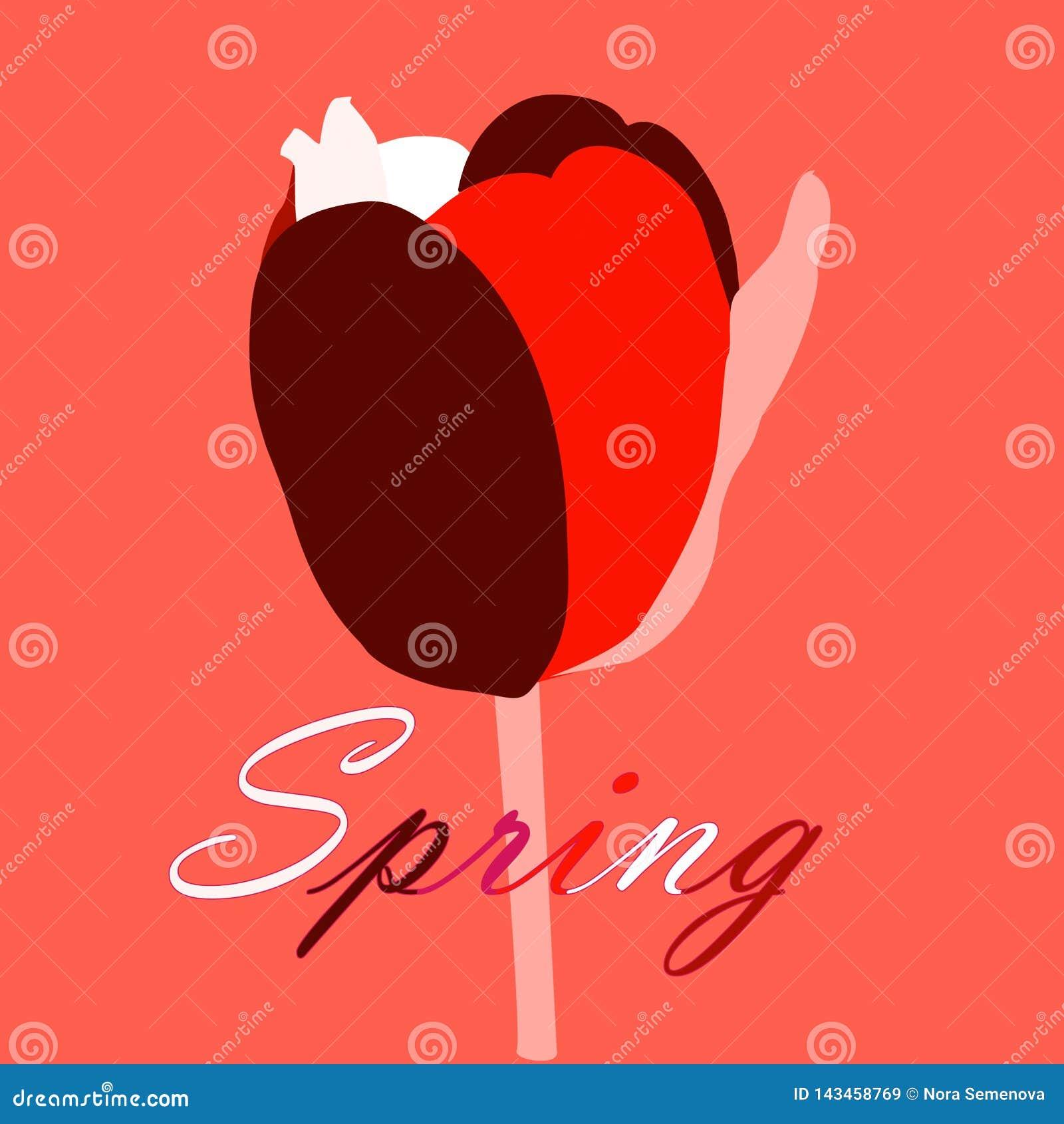 A tulipa muito-colorida abstrata em um fundo coral vivo, o cartão da mola com tulipa abstrata e as letras saltam