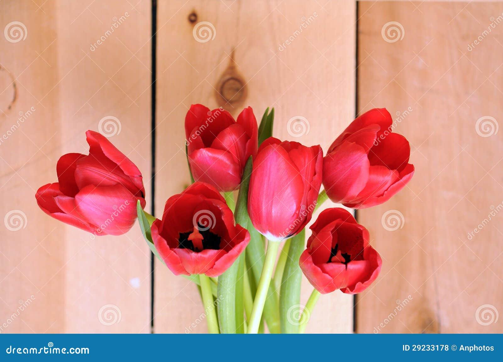 Download Tulipa vermelha foto de stock. Imagem de matrizes, flora - 29233178