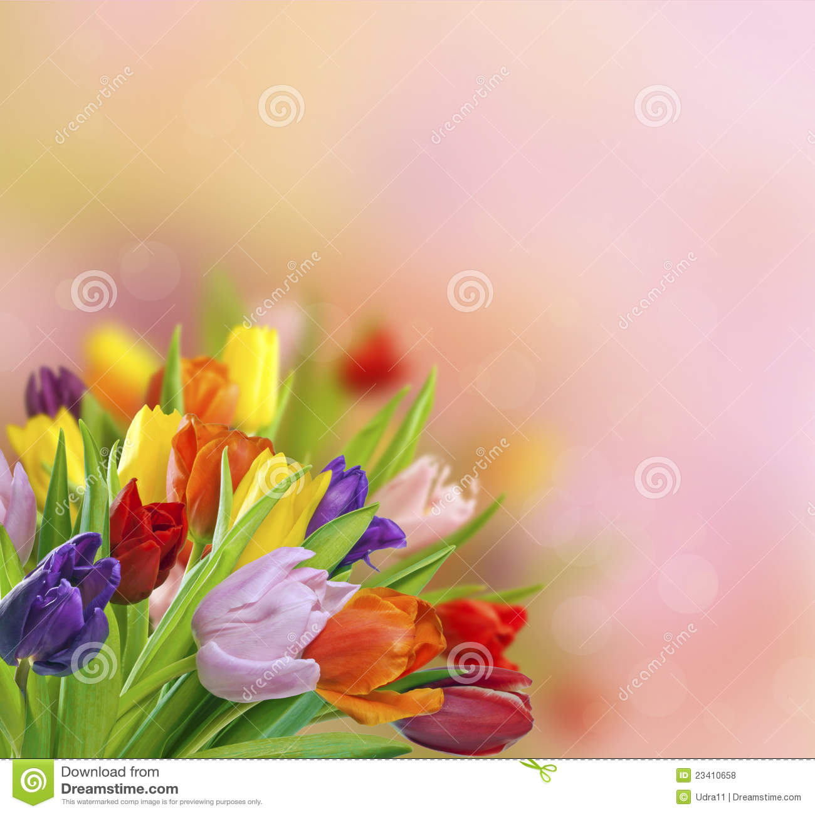 Tulipanes del resorte