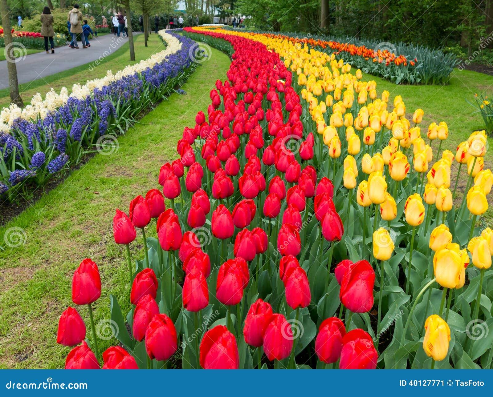 Tulipanes en los jardines de keukenhof en holanda foto - Jardines de holanda ...